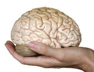 brain peals