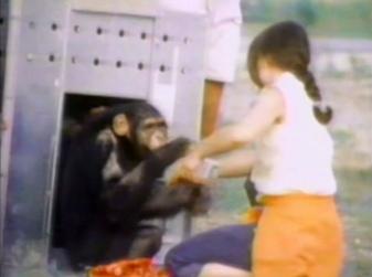 xιμπατζήδες